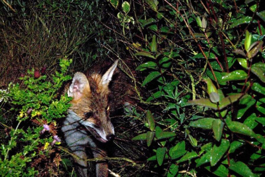 """Foxes"" Movie Stills Photography"